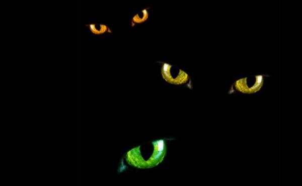 Five eye