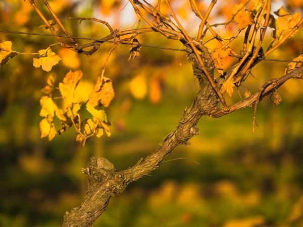 Jesenna krajina 02