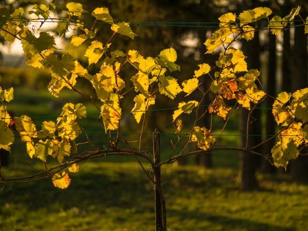 Jesenna krajina 03